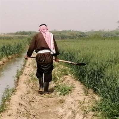 """فلاحو دير الزور: """"كورونا"""" آفة الموسم"""