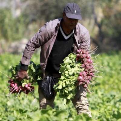 يحصل المزارع اللبنانيّ على 190 ليرة فقط من كل ألف ليرة