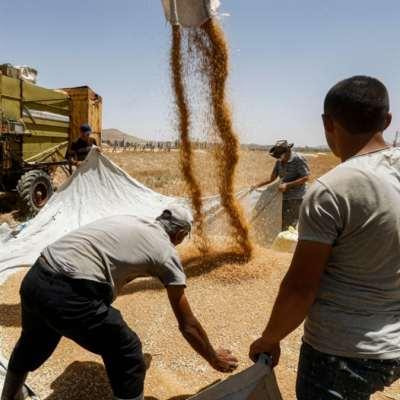 نقص «حادّ» في القمح... للمرّة الأولى منذ 2011