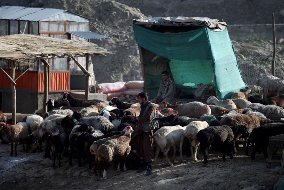 أفغانستان بين عيدَين:  هدنتان وحديث متجدّد عن «السلام»