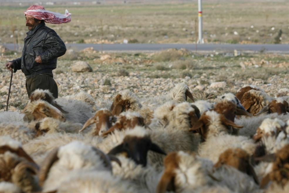 كيلو البقر بـ 35 ألفاً والغنم بـ 40 ألفاً بدءاً من منتصف الجاري: اللحم المدعوم يأكله التجار أم المسـتهلكون؟