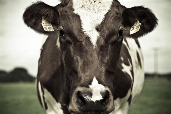 Cowspiracy على النت: الزراعة الحيوانية وأزمة المناخ