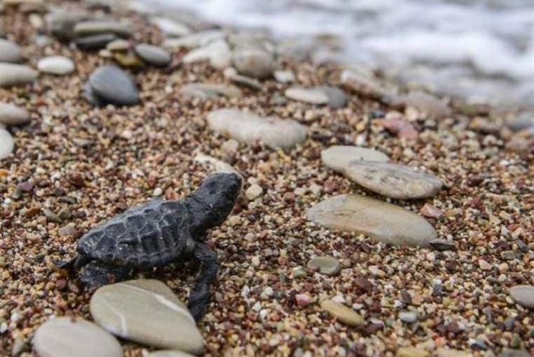 «الجمعيّة الدوليّة للحفاظ على صور»: إسرائيل لوّثت شاطئ الجنوب