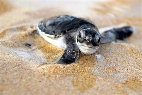 شاطئ صور... انقاذه «فعل وطني»