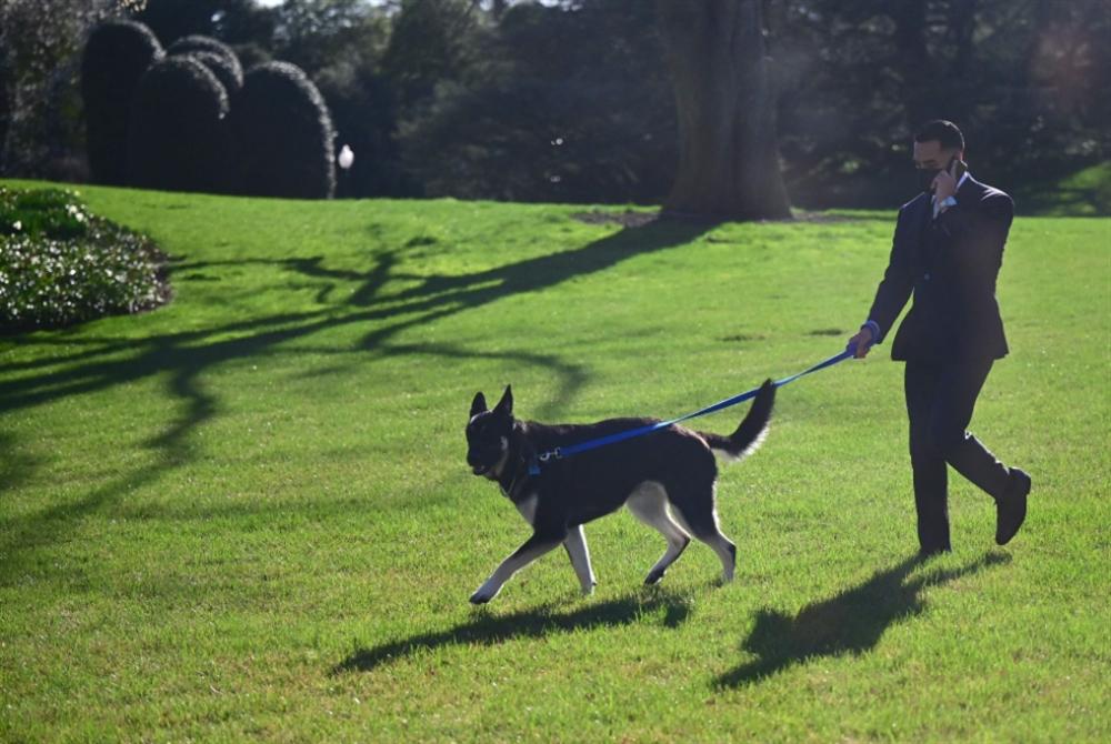 كلبُ بايدن يحتاج إلى «تدريب» للتأقلم في البيت الأبيض!