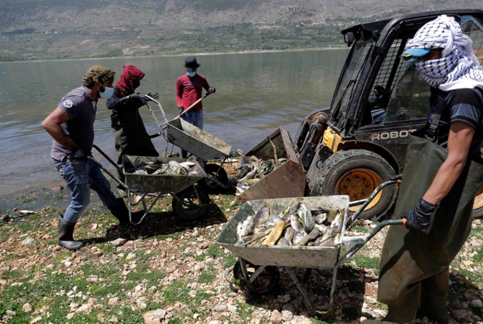 نفوق سمك الكارب «المقاوم» مؤشر على موت البحيرة: تلوث القرعون خرج عن السيطرة