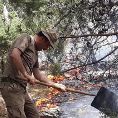حريق الضنّية قضى على 20 ألف متر من الأحراج: صيد الخنازير السبب؟