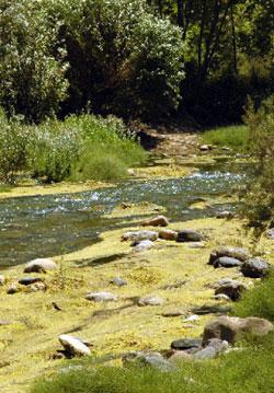 التلوّث يقضي على نهر جنّة (الأخبار)