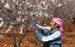 المزارعون يطالبون بالكشف عن الأضرار والتعويض عليهم (رامح حمية)