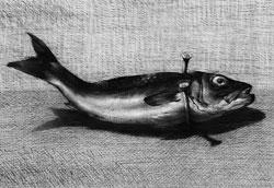 من سلسلة «أسماك» (فحم على ورق ـ 150 x 150 سنتم)