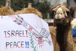 جِمال غزّة ضدّ الإرهاب الإسرائيلي أيضاً (مهدي فدوش ـ أ ف ب)