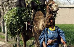 امرأة أفغانية في جلال آباد (بارويز - رويترز)