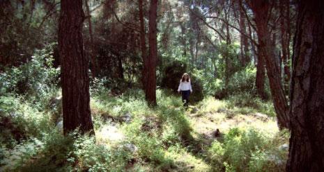 من فيديو «الصوت والغابة» (2 د ــ 2016) لسينتيا زافين