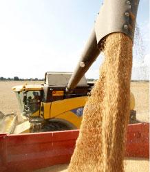 تواصل عمليات جمع المحاصيل في فرنسا ( باسكال روسيغنول - رويترز)